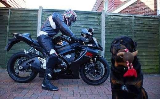 Psy na motocyklach 10