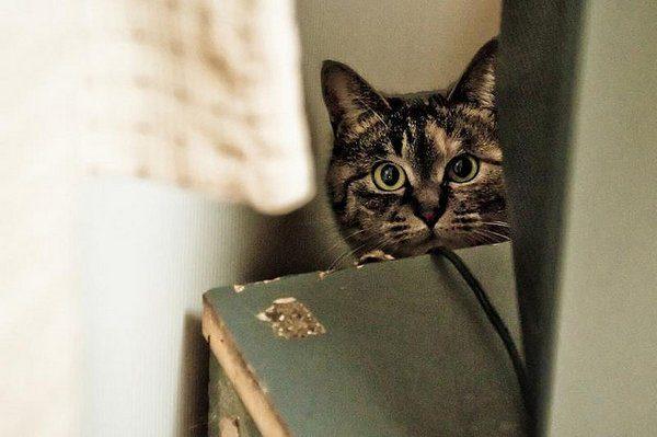 Przyczajone koty #2 13