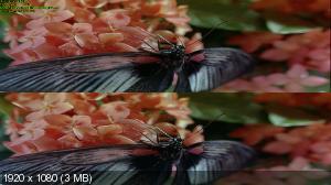 Жуки! (Букашки!) 3д / Bugs! 3D Вертикальная анаморфная