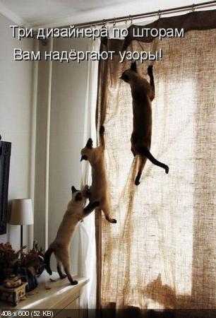 Лучшие котоматрицы от 14.10.11