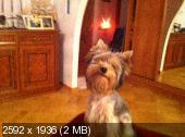 http://i28.fastpic.ru/thumb/2011/1114/60/93db7b53c03cc9a7ac2a128645ca9460.jpeg