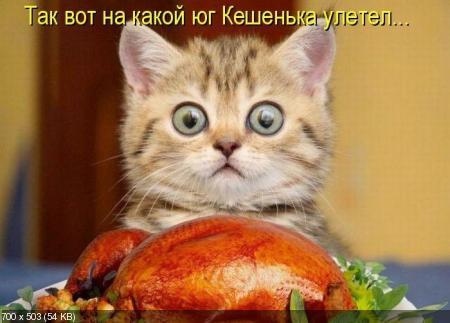 Лучшие котоматрицы недели. Декабрь 2011 (50 фото)