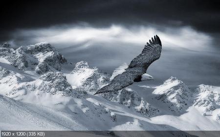 Обои для рабочего стола - Зимняя сказка (2011) JPG