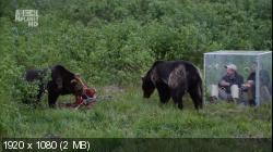 Как прокормить медведя / Bear Feeding Frenzy (2008) HDTV 1080i