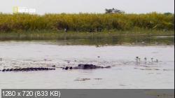 Король крокодилов / Crocodile King (2010) HDTVRip 720p