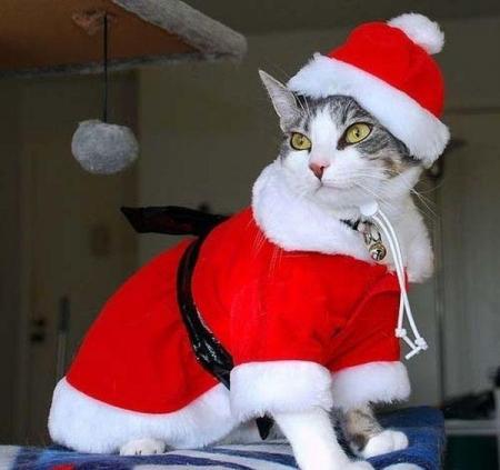 Коты на Новый год (108 фото)