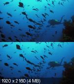 Галапагосы 3D (Галапагосы: Очаровательное Путешествие) / Galapagos: The Enchanted Voyage (1999) BDRip 1080p