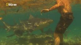 National Geographic. Самые опасные акулы / National Geographic. World's Deadliest Sharks (2011) HDTVRip 1080p