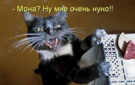 Свежие котоматрицы  от 11.02.2012