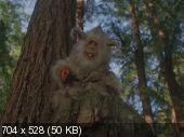�����: ����� �� ����� / Ewoks: The Battle for Endor (1985) DVDRip