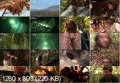 ������� ������ �������. ����� � �������� / Man vs Monster. Amazon Terror (2011) HDTVRip