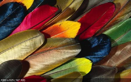 Colorful Feathers and Wings Wallpaper - 2012 / Красочные перья и крылья обои - 2012