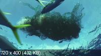 Королевство океанов / Kingdom of the Oceans / Le Peuple des Oceans (2011) BDRip 1080p / 720p + HDRip