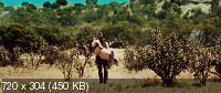 Ковбои против пришельцев / Cowboys & Aliens [EXTENDED] (2011) BD Remux + BDRip 720p + HDRip 2100/1400/700 Mb