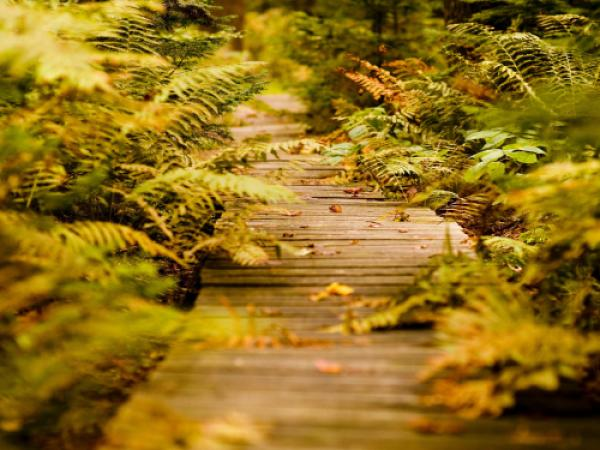 Природа и окружающая среда фото