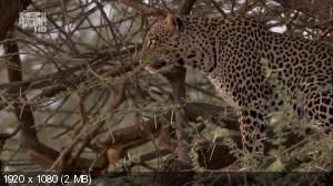 В дебрях Африки / Wildest Africa (2010) HDTV 1080i + HDTVRip 720p